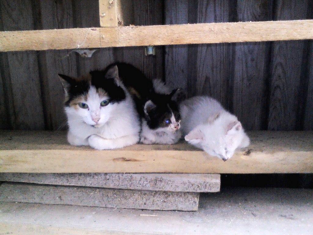 Кошачья семейка