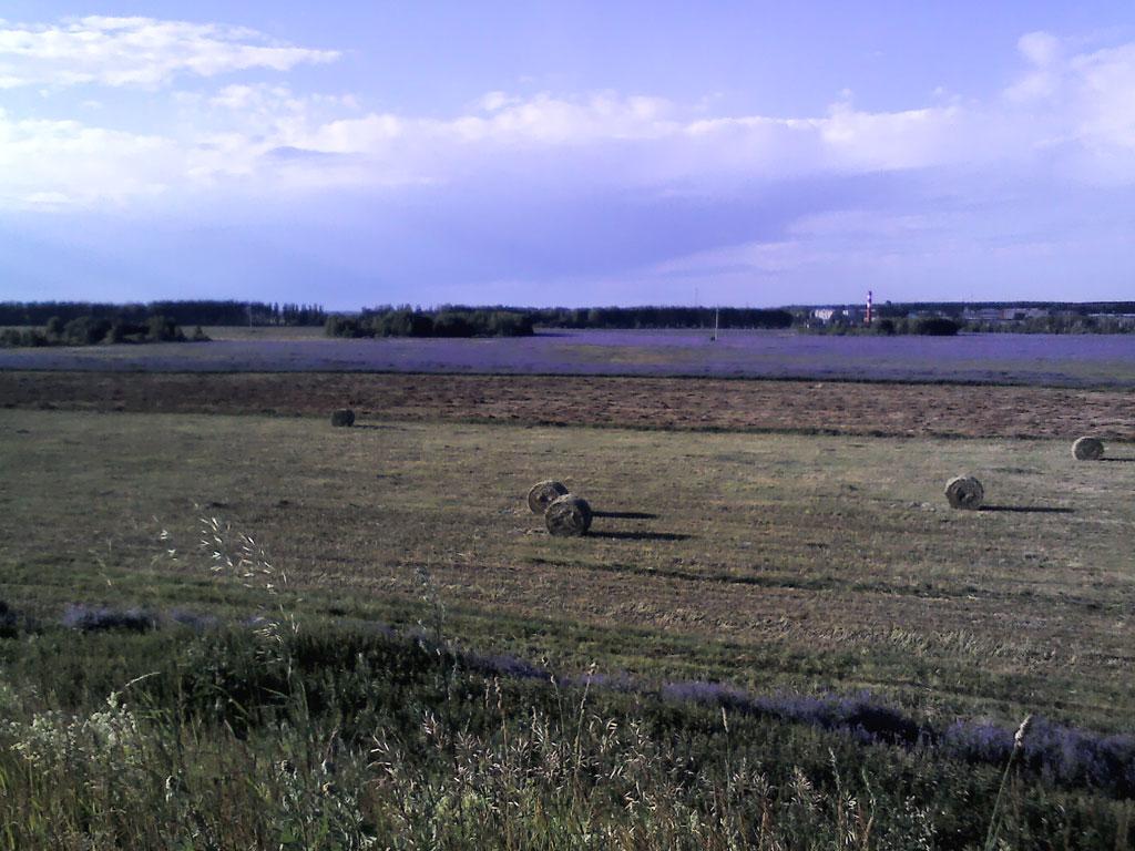 Живописное поле