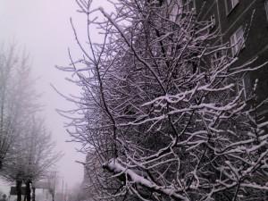 в Екатеринбурге за день выпала месячная норма снега