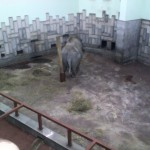 Унылый слон